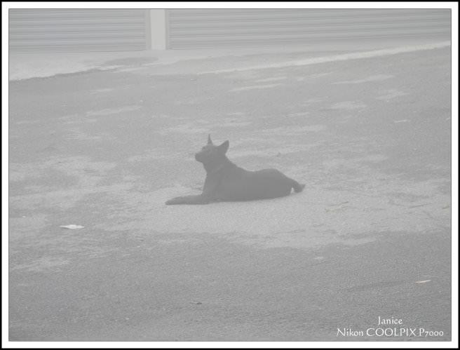 霧中的狗狗