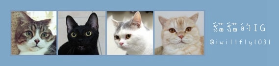 貓貓IG.jpg